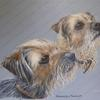 Border Terriers by Jo Chesney. Dog Pet Portrait in acrylic on canvas