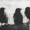 Crows. Photo etching.
