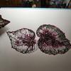 Begonia Rex. Botanical painting in watercolour.
