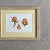 Dried rosebuds. Botanical watercolour.