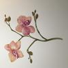 Phalenopsis. Botanical watercolour.