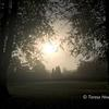 October morning, Rothamsted Park ~ photograph