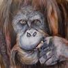 Orangutan in Acrylic and colouring pencil. A2 watercolour paper