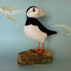 Puffin - needlefelted with Shetland and Merino wools (carved and painted wood beak)