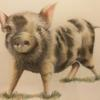 A piglet drawn using coloured pencils.
