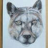 Puma drawn with coloured pencils
