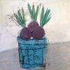 Hyacinth Bulbs - mixed on board