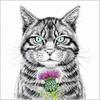 Scottish Wildcat - ink and watercolour by Sue Wookey