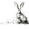 Sitting Hare Charcoal Drawing