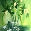 Snowdrops & Hellebores ~ watercolour painting