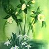 Snowdrops and Hellebores -  watercolour
