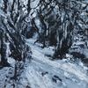 Snowy Path. Acrylic on Canvas Board