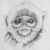 snub nosed  monkey   sketch using graded pencils.
