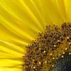 Sunflower segment, maths colour, photography