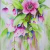 Pink Hellebores   Watercolour  Framed 39 x 49cm   new