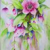 Pink Hellebores   Watercolour  Framed 39 x 49cm
