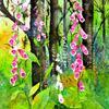 Ashridge Foxgloves