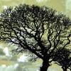 Helford Trees