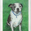 The colonel. Staffordshire bull terrier. Pastel on paper