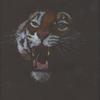Tiger. Acrylic on black paper
