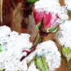 Christmas Rose / mixed media