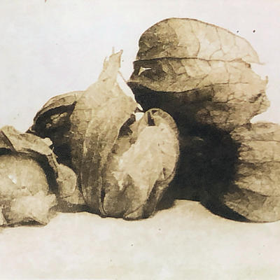 Gooseberries - Photopolymer Etching