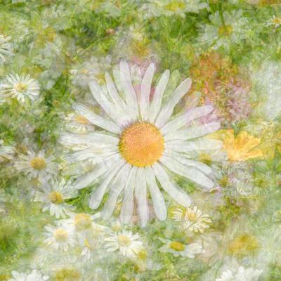Dreamy daisies: impressionist, fine art, digitial composite photograph