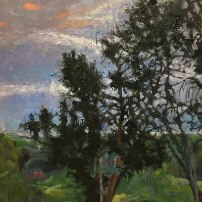 Ash trees at dusk