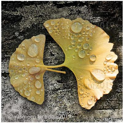 Digital art, Ginkgo leaf, Ancient 1