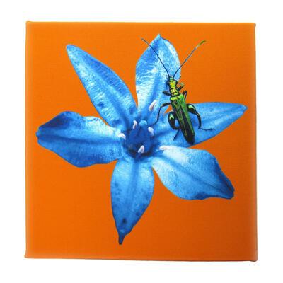 Flower Beetle Canvas 1, 30x30cm, £50