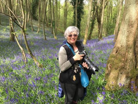 Out with my camera, photographing bluebells