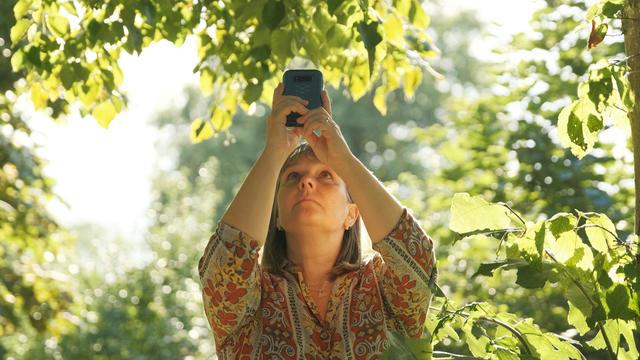 Artist Hayley Trampenau taking a photo of light through leaves